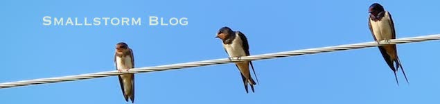 Smallstorm Blog swallows